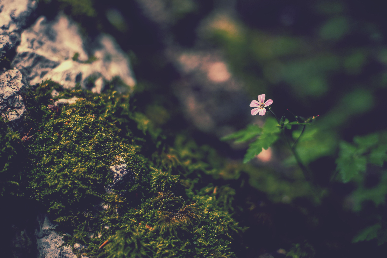 portrait flower